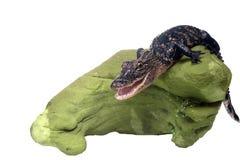 Un alligatore sorridente allegro su una pietra verde Isolato su bianco Immagini Stock