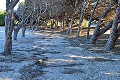 Un allyway allineato albero Fotografia Stock