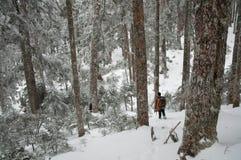 Un alpiniste marchant dans la forêt couverte de neige Photographie stock