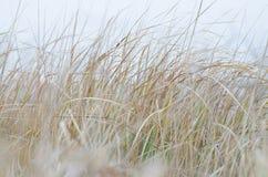 Un'alta erba asciutta Fotografia Stock Libera da Diritti