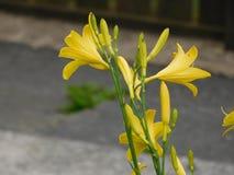 Un altro fiore bello da qualche parte lungo il percorso fotografia stock