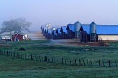 Un amanecer de niebla sobre una granja de la fábrica Imágenes de archivo libres de regalías
