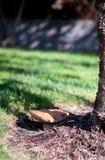 Un amigo del árbol de abedul Fotografía de archivo
