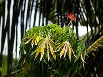 Un amour de belle âme de fleur naturelle Photo libre de droits