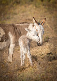 Un amour de mère Photo stock