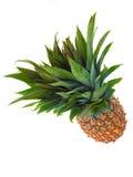 Un ananas contro una priorità bassa bianca Fotografie Stock