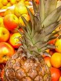 Un ananas parmi des pommes Photo libre de droits