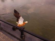 Un'anatra si siede sull'acqua Fotografie Stock