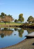 Un angolo del lago fotografia stock libera da diritti