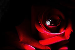 Un anillo de diamante en la rosa roja foto de archivo libre de regalías