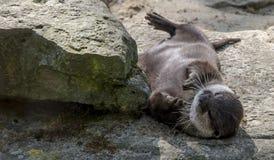 Un animal perezoso Foto de archivo libre de regalías