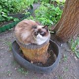 Un animale domestico favorito Fotografie Stock