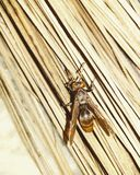 Un'ape Fotografie Stock