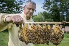 un apicoltore che lavora con l'ape quen i cels fotografia stock libera da diritti