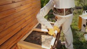 Un apicoltore in un vestito protettivo bianco apre il coperchio di un alveare di legno con un utensile speciale Le api stanno vol stock footage