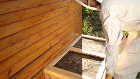 Un apicultor de la muchacha en un traje protector blanco empuja un estante con las colmenas Concepto de la apicultura de la agric metrajes