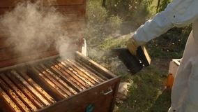 Un apicultor de la muchacha en un traje protector blanco sopla para arriba la colmena de modo que las abejas lleguen a ser menos  metrajes
