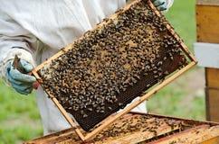 Un apicultor en el trabajo Imágenes de archivo libres de regalías