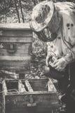 Un apicultor en transplantes de una máscara una familia de abejas en la primavera a otra colmena Fotos de archivo libres de regalías