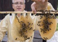 un apicultor que trabaja con la abeja quen cels Imagen de archivo libre de regalías