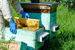 Un apicultor trabaja en una colmena cerca de las colmenas Miel natural directamente de la colmena Célula con la miel fresca Imagen de archivo libre de regalías