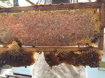Un apicultor y su panal fotos de archivo libres de regalías