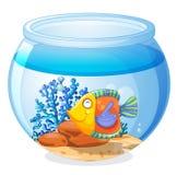 Un aquarium avec un poisson illustration stock