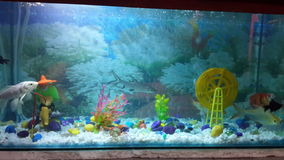 Un aquarium propre Image stock