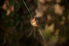 Un'aracnide si siede nel suo lair fotografia stock