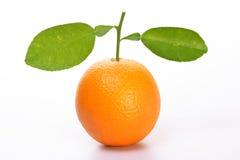 Un arancio con i fogli immagini stock