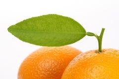 Un arancio con il foglio fotografia stock libera da diritti