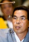 Un arbitro che guarda una lotta dei due ragni Fotografia Stock