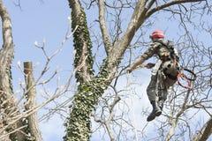 Un arborista que usa una motosierra para cortar un árbol de nuez imagenes de archivo