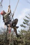 Un arboriste à l'aide d'une tronçonneuse pour couper un noyer images stock