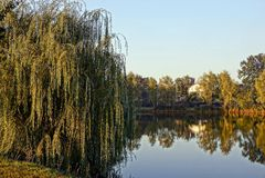 Un arbre à feuilles caduques sur le rivage d'un lac un jour ensoleillé Image libre de droits
