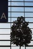 Un arbre à l'aéroport de Changhaï Photo stock