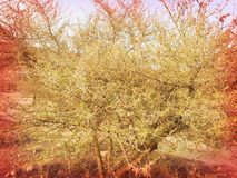 Un arbre image stock