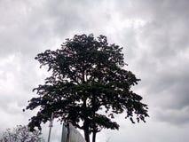 Un arbre Photo libre de droits