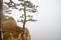 Un arbre au bord d'une falaise dans le brouillard Photos stock