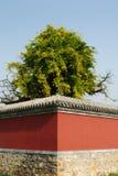 Un arbre au coin d'un mur photographie stock libre de droits