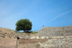 Un arbre au Colisé d'amphithéâtre dans Ephesus Efes Photographie stock
