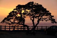 Un arbre au coucher du soleil Image stock