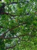 Un arbre au printemps photo stock