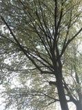 Un arbre avec des fleurs Photo libre de droits