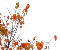 Un arbre avec des lames d'automne Image stock