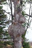 Un arbre avec un problème Images libres de droits