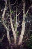 Un arbre branchu dans le premier plan Photographie stock libre de droits