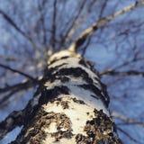 Un arbre brillant de soleil au centre de Kyiv, Ukraine Photos libres de droits