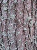 Un arbre couvert d'écorce Images stock