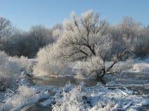 Un arbre couvert de gelée Photographie stock libre de droits
